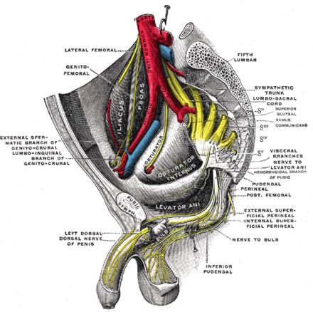 penisul flasc în timpul actului sexual)