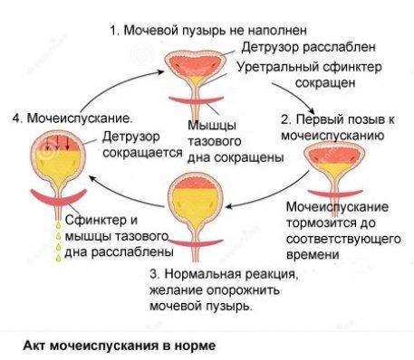 erecție după o intervenție chirurgicală urinară)