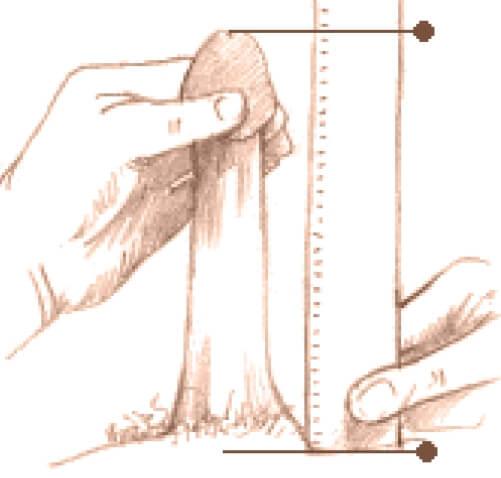 lungimea și circumferința penisului