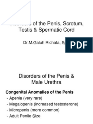 testosteron și penis)
