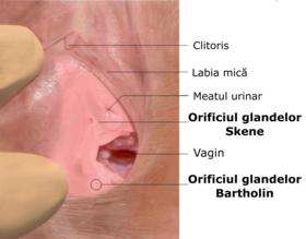 când penisul se află în vagin)