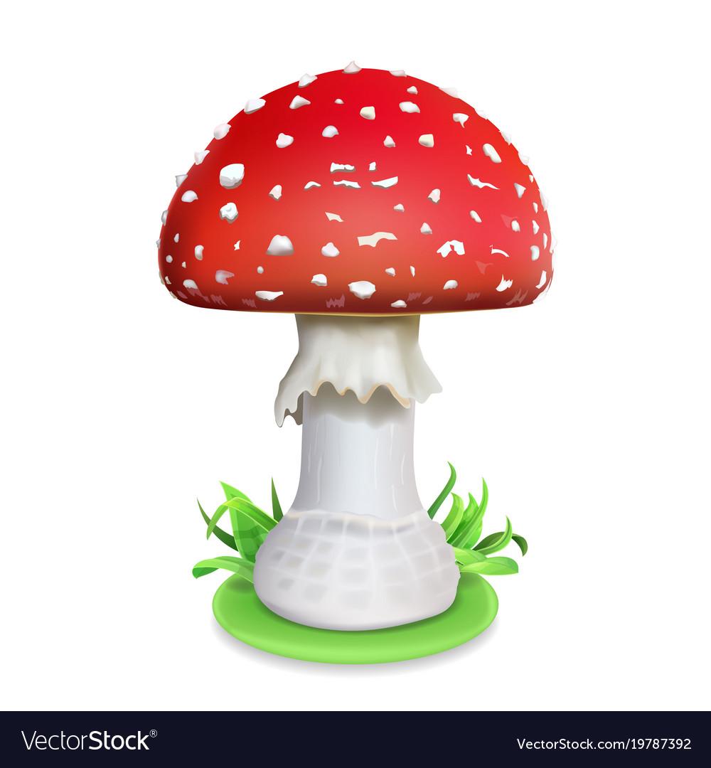 Amanita Cezareea sau descriere ciuperci regală și diseminarea