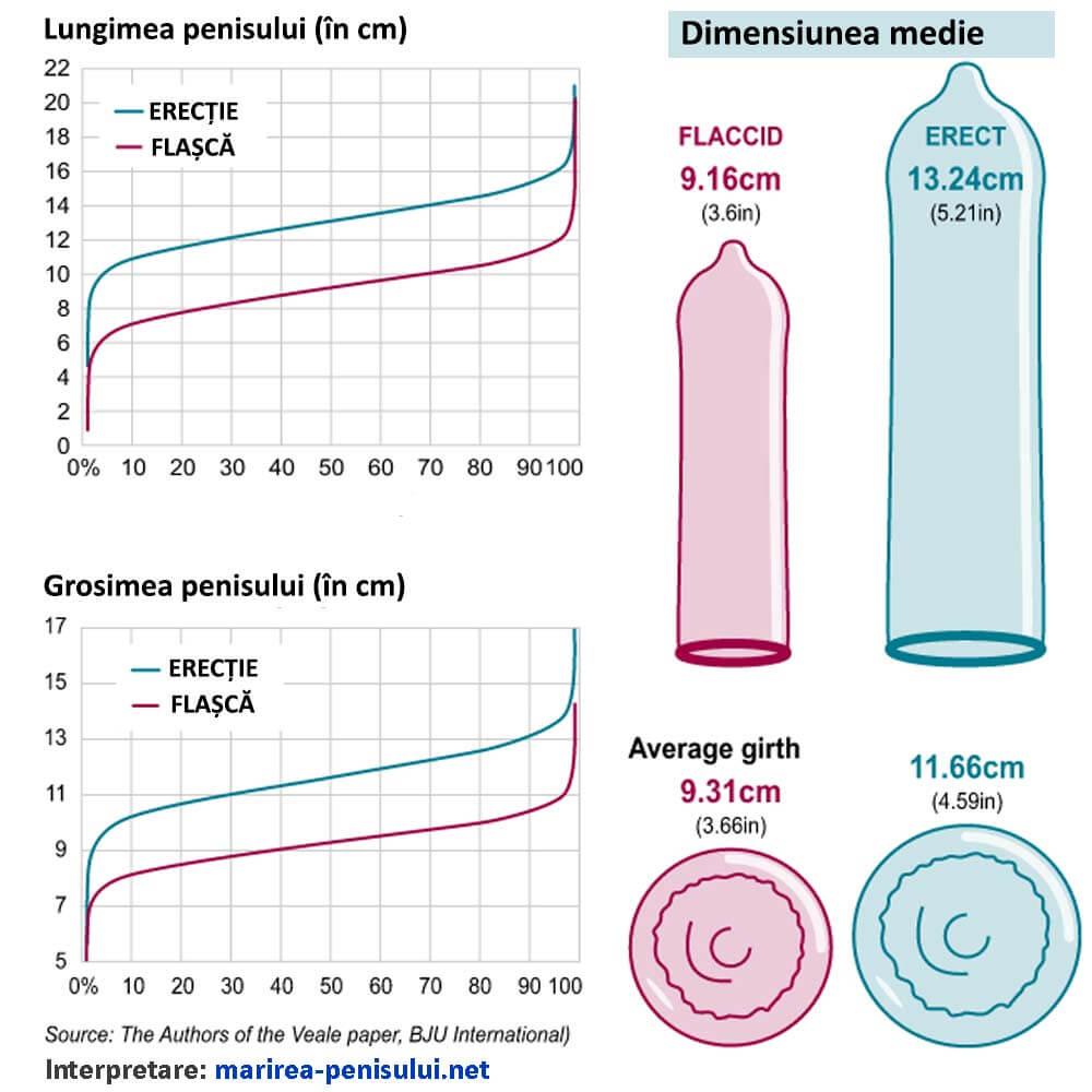 penis până la cât timp crește