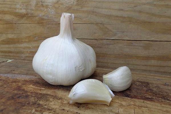 Usturoiul – Viagra naturală