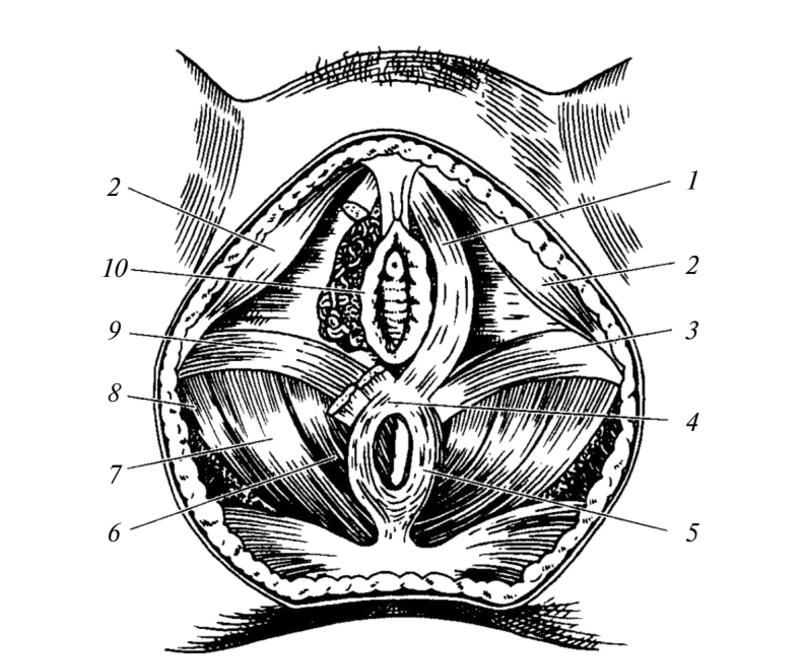 Tehnici Naturale de Marire a Penisului Si Intarirea Erectiei