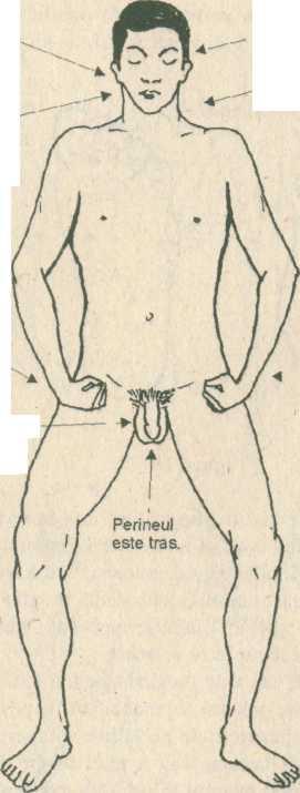 penis în interiorul circuitului)