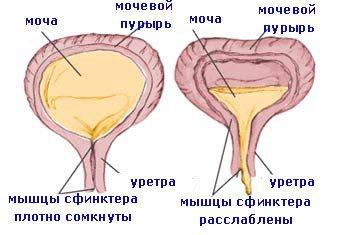 poate un om să rețină o erecție)