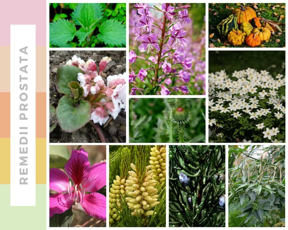 plante medicinale pentru erecție