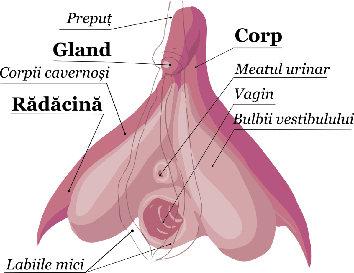 Hematom pe penis