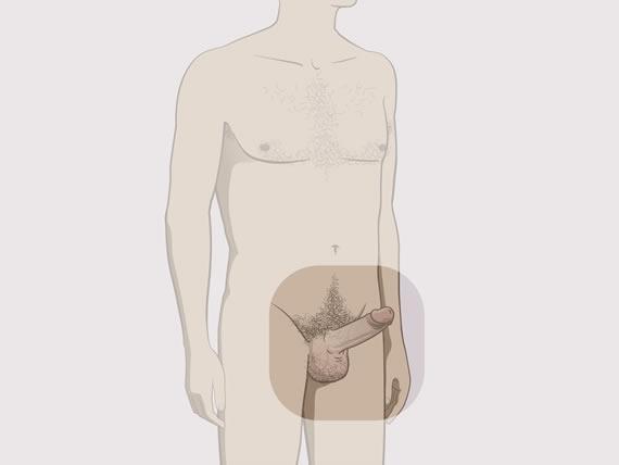 scurgeri de lichid din penis)