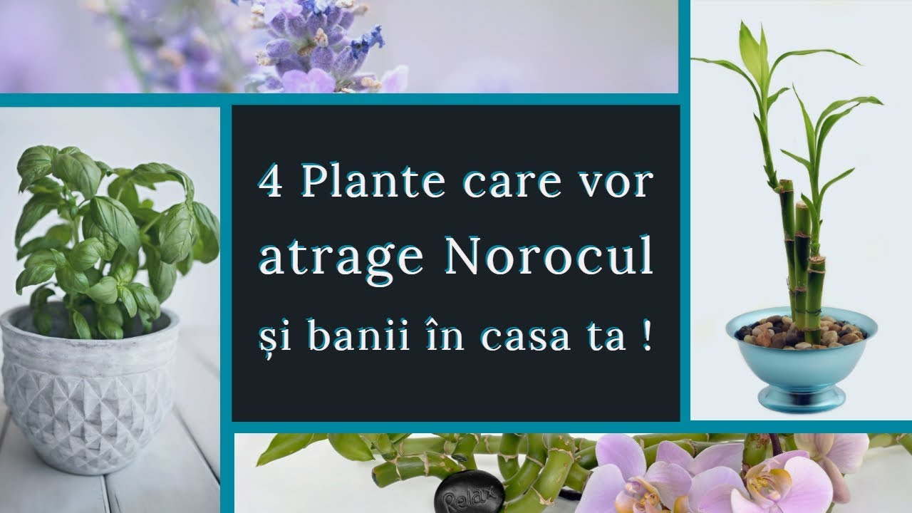plante care cresc erecția)