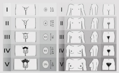 dimensiunile penisului masculin după rasă)