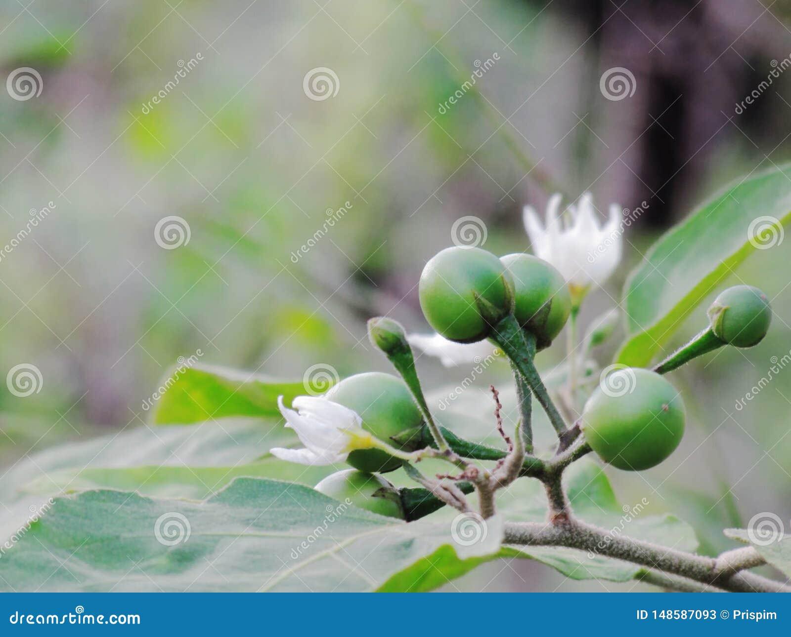 Seminte de dovleac - beneficii pentru sanatate