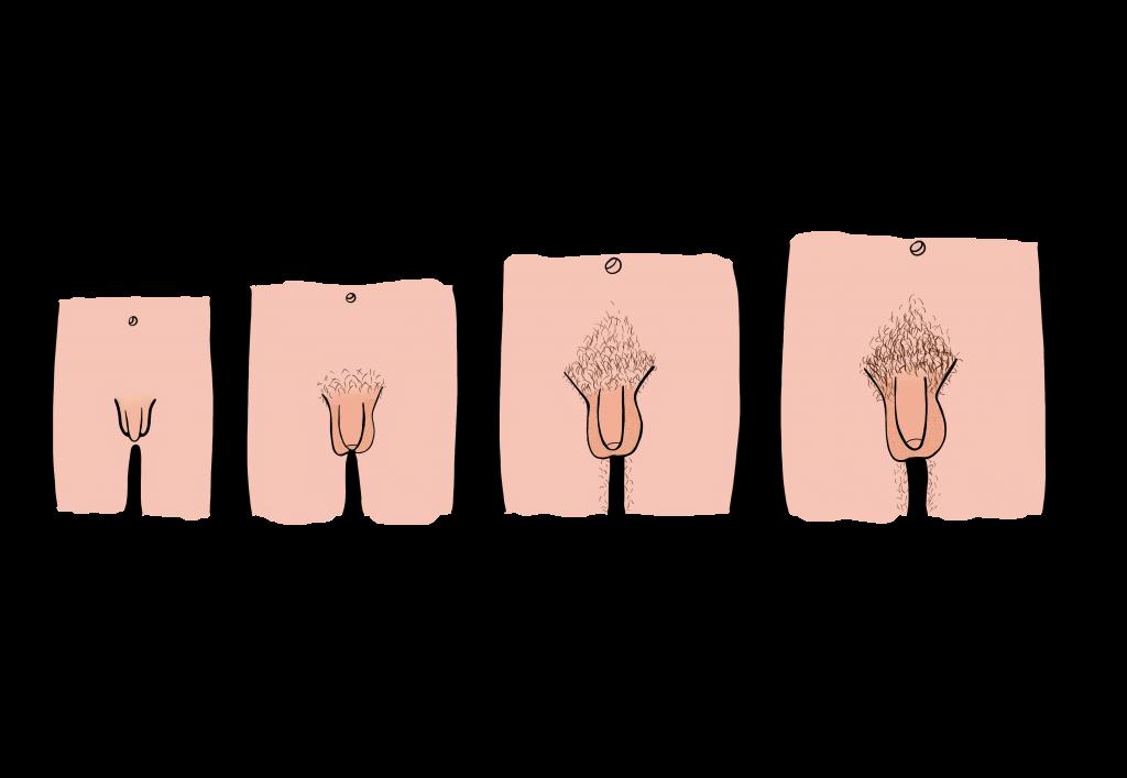 în timpul pubertății penisul nu crește