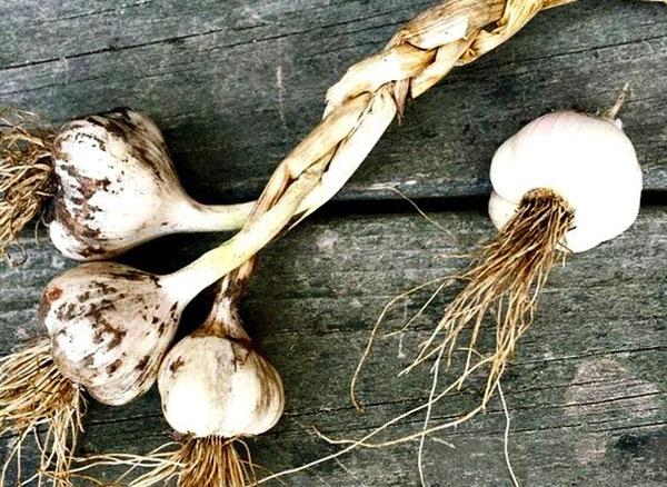 32 moduri de a crește potența bărbaților folk remedii timp de 3 zile