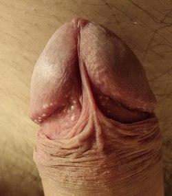 cum poate arăta un penis)