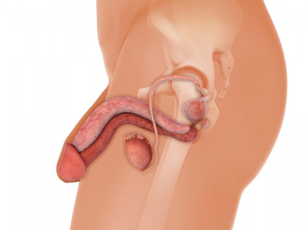 boala și simptomele penisului