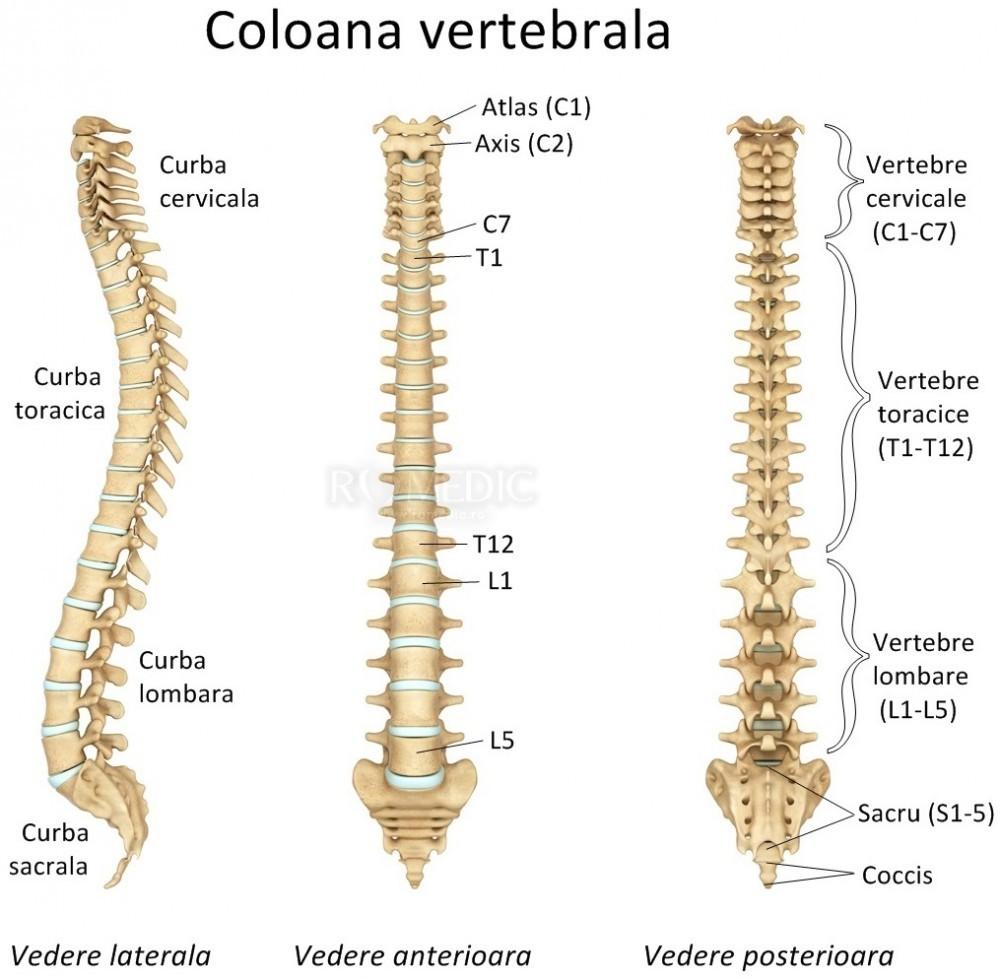 coloana vertebrală și erecție erecție scăzută la bărbați