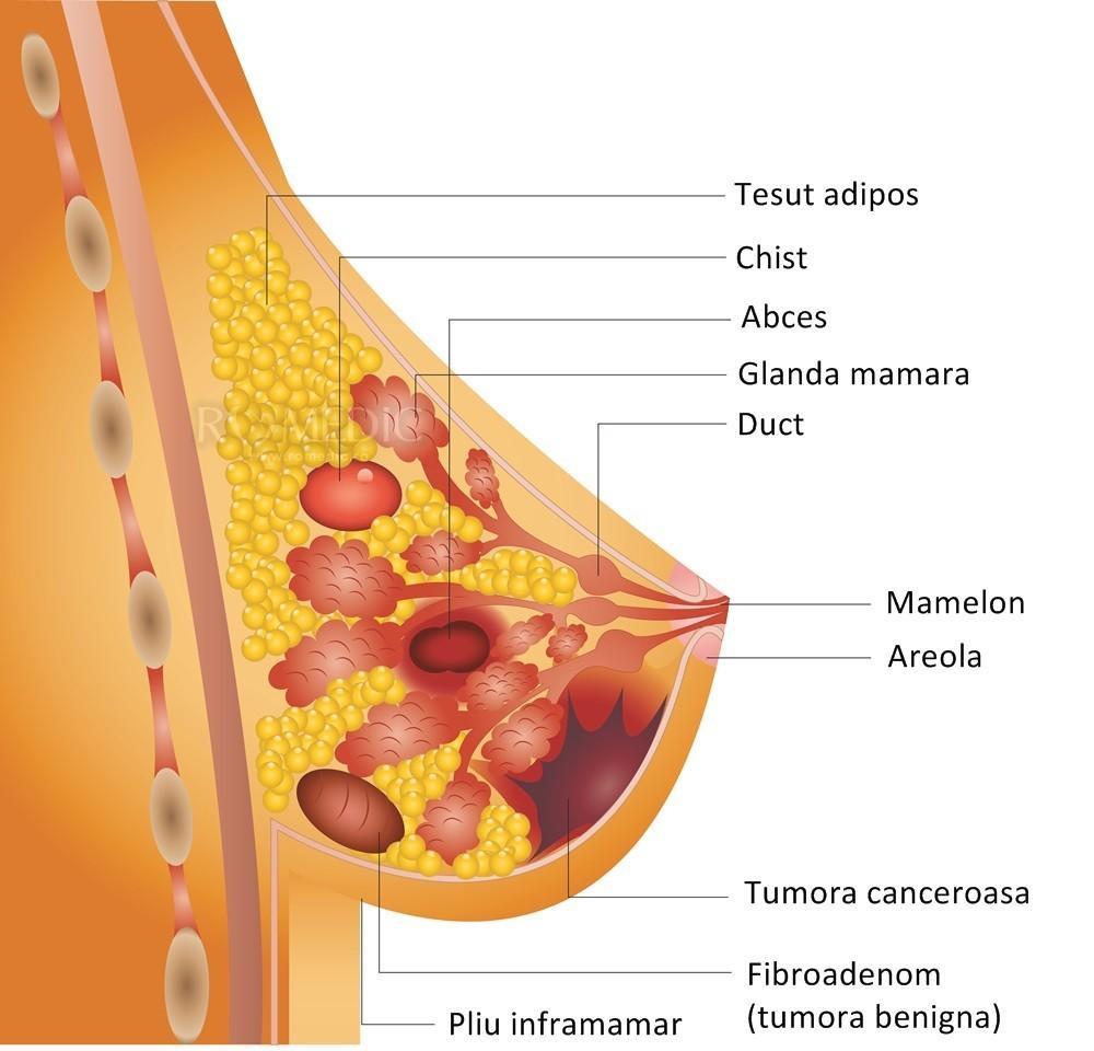 Scurgerile mamelonare