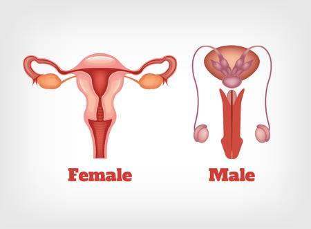 penis de viață intimă care este riscul unei erecții frecvente