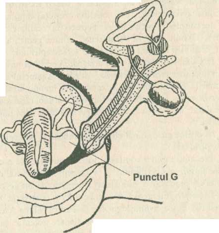 *-Primul pas: opriţi penetrarea, contractaţi puternic muşchii şi