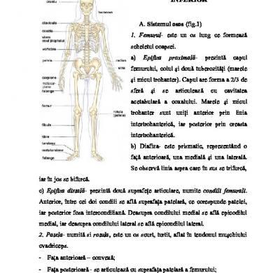 Tumescență peniană nocturnă