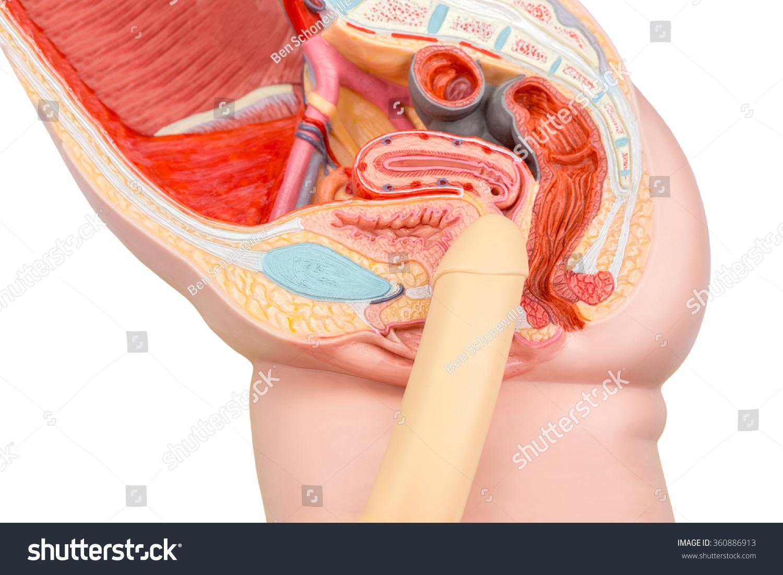 recenzii inel vibrator penis