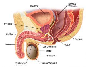schimbarea penisului cu prostatită