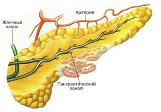 pancreas și erecție)