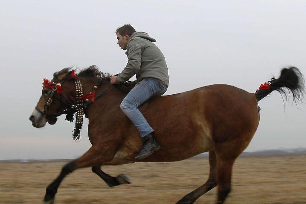 lungimea penisului calului