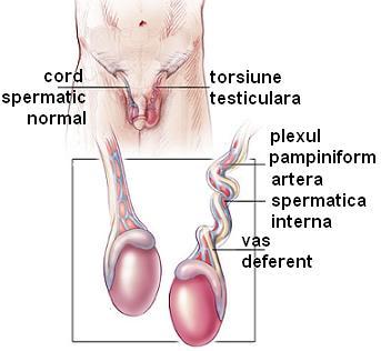 cum se identifică o boală pe penis