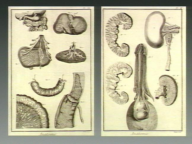 viol penis