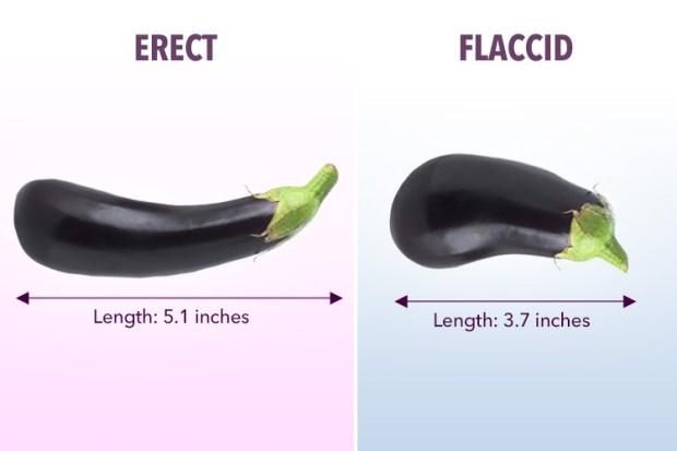 când este erect, penisul este închis alege după penis