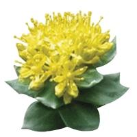 plante de îmbunătățire a erecției